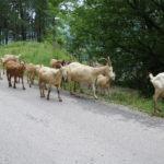 Serbien (RS) – auf dem Weg durch Serbien
