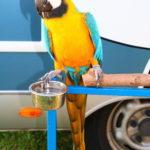 manche Camper haben einen Hund andere einen Papagei