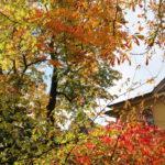 Weimar (D) – im Schlosspark Belvedere