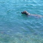 Kroatien 2008 063