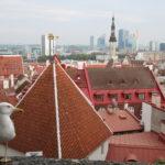 Tallinn (EST) – Über den Dächern der Altstadt
