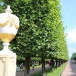 St. Petersburg (RUS) – Schloss Peterhof – im Schlossgarten