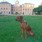 "Rastatt (Schloss Favorite) – ""Gräfin"" Lisa of Simbawoye"