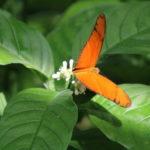 Insel Mainau – Im Schmetterlingshaus