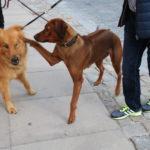 Dinkelsbühl – Lisa und Alf