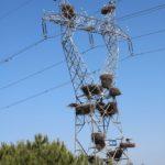Storchennester auf dem Mast – Schnappschuss von der Autobahn zur Agave