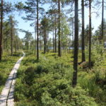 Fågelsjö Gryssjövägen (S) – Weg zum See
