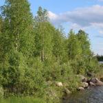 Auf dem Weg nach Kiruna (S) – Nur Gegend (Straße, Wald und Seen) aber schön